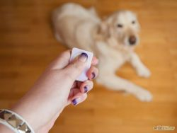 670px-Clicker-Train-Your-Dog-Step-5