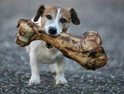 dog-poison big